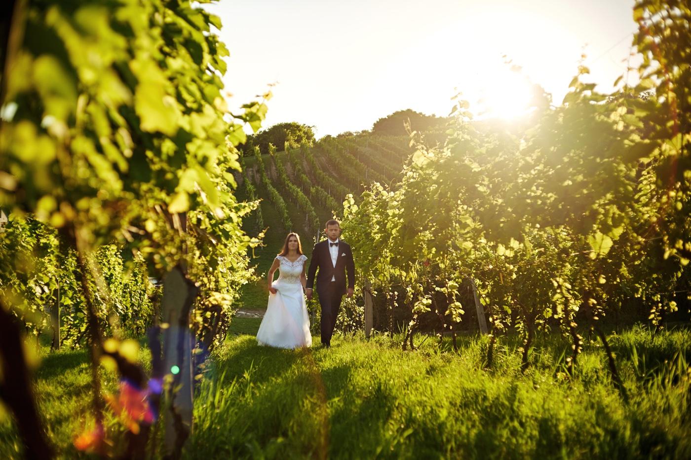 plener ślubny w winnicy