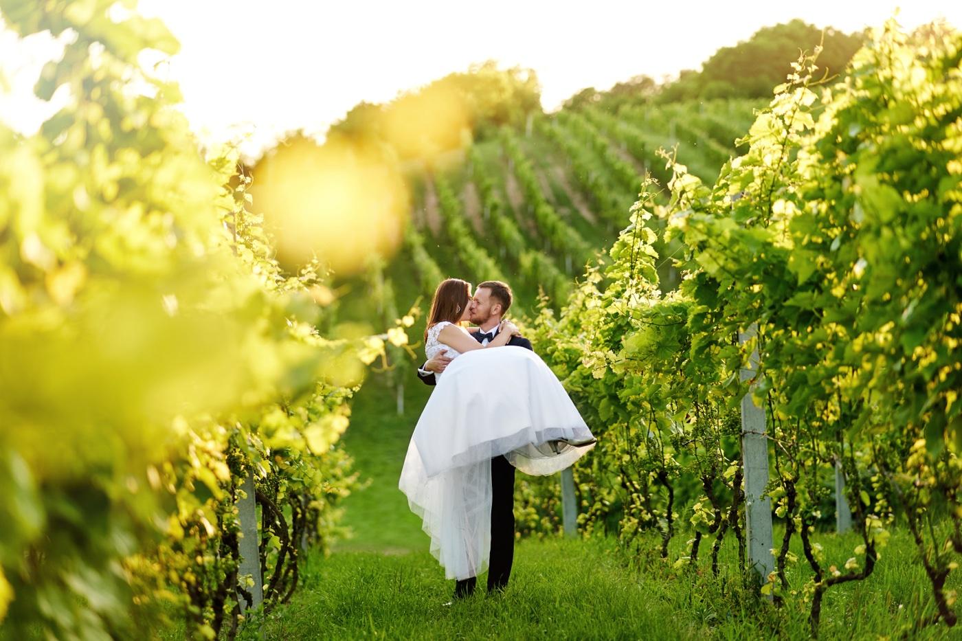 plener ślubny w winnicy Dwikozy